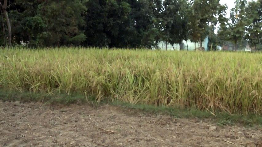 Bhojpuri Film Shooting Clip leaked -1