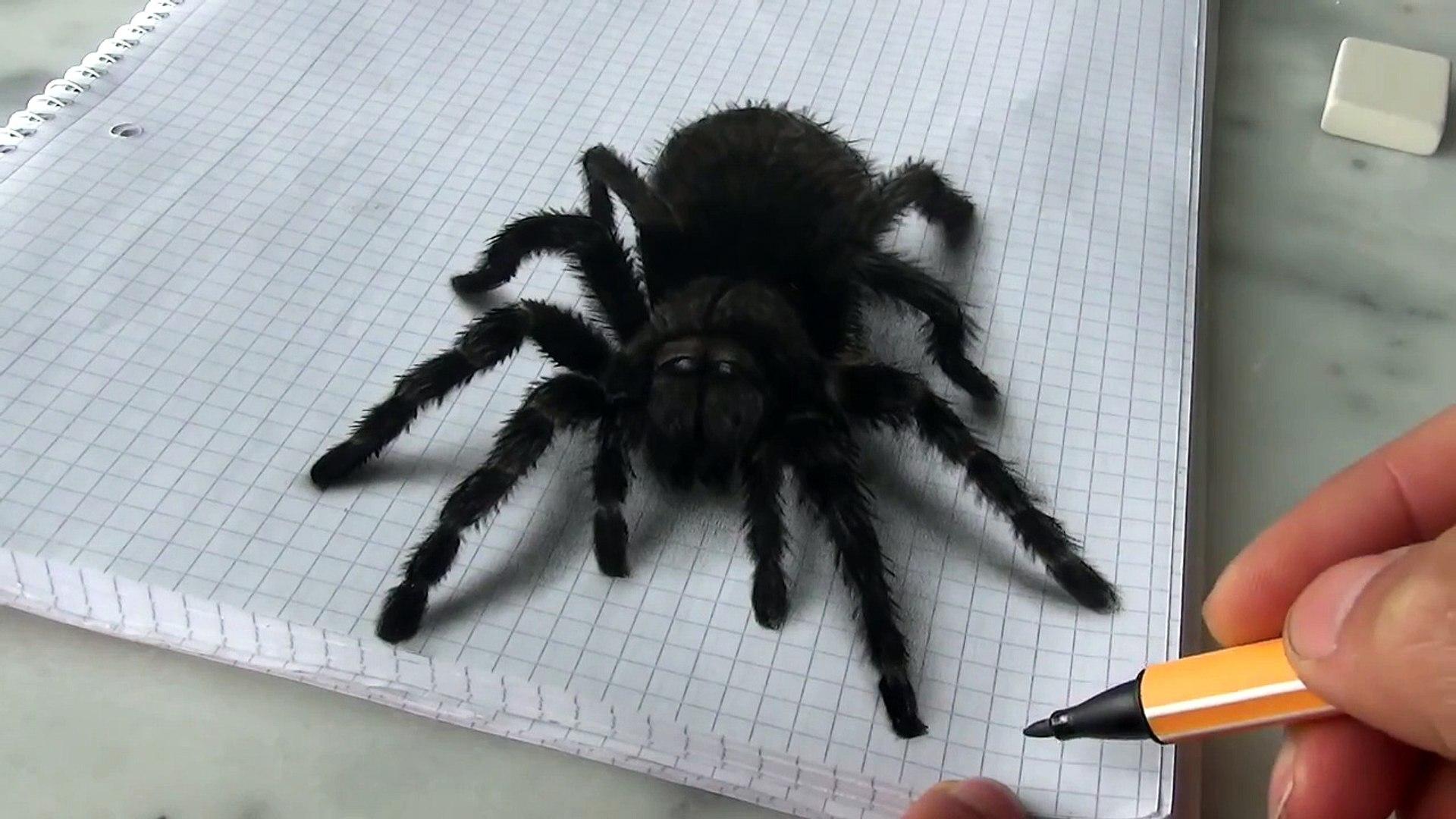 3d Spider Drawingamazing Realistic Illusion