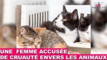 Une femme accusée de cruauté envers les animaux! L'histoire dans la minute chat #64