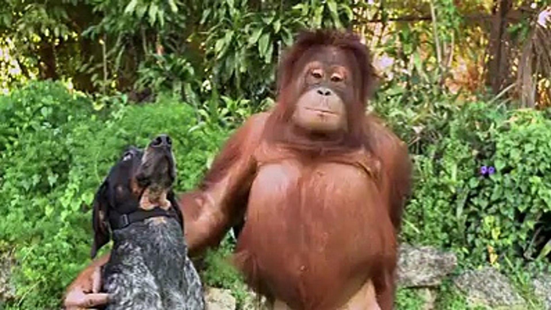 animal love...SO FUNNY