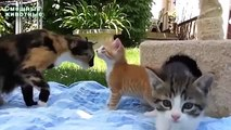 Bromas sobre mascotas. animalitos divertidos