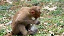 Diversión con los monos. mono divertido