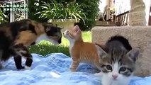 Blagues sur les animaux de compagnie. petits animaux drôles