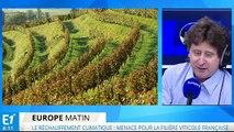 Réchauffement climatique : il faut réformer les vignobles