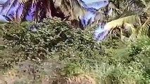 la isla de los hombres solos mario almada peliculas mexicanas epoca de oro