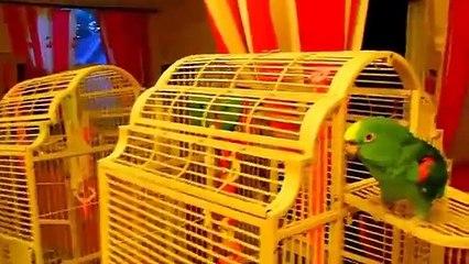 Falando papagaio macaco verde!