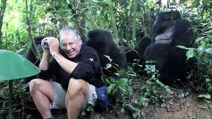 Gorillas cercado homem!