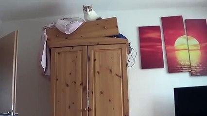 Gracioso salto gato