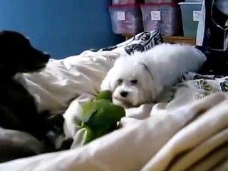 Dois cães e um papagaio verde