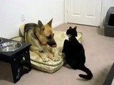 ► Gato Loco Ataca Perro ► NO TIENE MIEDO!! humor gatos - video divertido gatos - RISA GATO