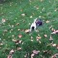 Histoire de chiens . . . Quand Buddy rencontre Prunelle ! #chiens #animaux