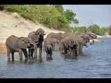 360 Video  - Elephants at the banks of the Chobe River  - Photos of Africa
