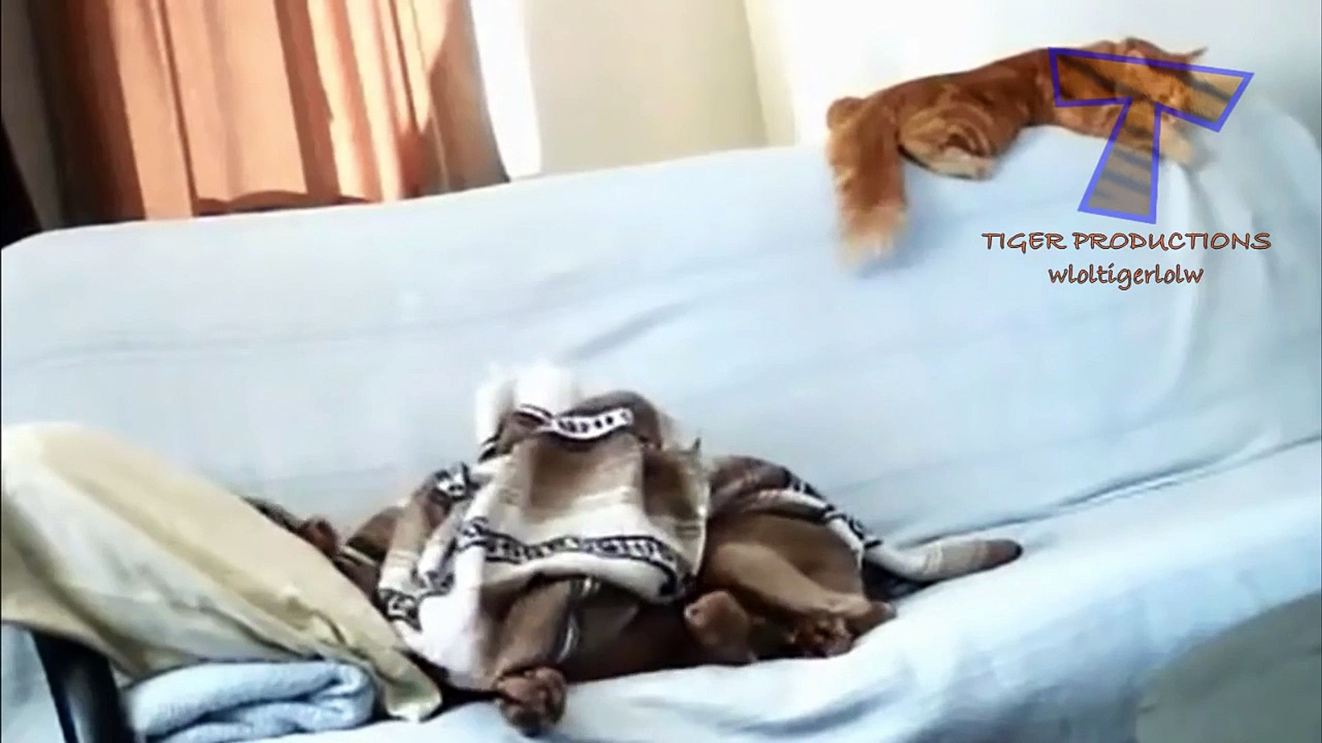 Funny animals stealing stuff - Cute animal compilation