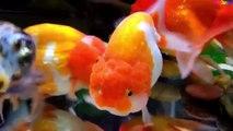 Cá Vàng Bơi ✤ Ca Nhạc Thiếu Nhi - Giúp Bé ăn ngon