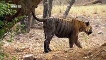 Documentary Animals - Animals Documentary National Geographic - Wild Animals Documentary 2015