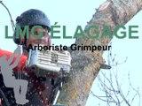 LMG ÉLAGAGE à Rioux, arboriste grimpeur.