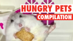 Hungry, Hungry Pets || Funny Food Compilation