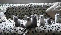 ★ EL BAILE DE LOS GATITOS (SIN TRUCOS) ★ Video Gatos Locos - Humor Gatos - Gatos Divertido