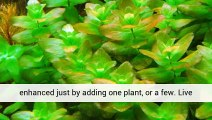 Aquarium Plants And Pets Planted Aquarium Aquarium Plants Uk
