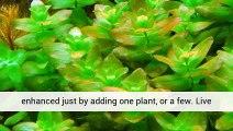 Aquarium Plants Types Planted Aquarium Aquarium Plants Uk