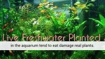 Aquarium Plants Blue Light Planted Aquarium Aquarium Plants Uk