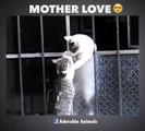 L'amour d'une maman chat envers ses petits... Trop mignon