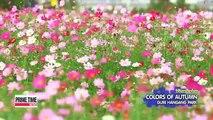 Spot-20150930 Viewfinder COLORSOF AUTUMN GURI HANGAG PARK 20150930 뷰파인더 구리한강 시