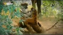 Animal Planet Discovery Channel Wild Life Documentary 2015 National Geographic Wildlife #2