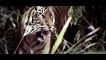Animal Planet || Animal Planet Full Episodes || Animal Planet Documentary #2