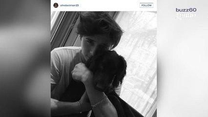 El nuevo cachorro Beckham abre su cuenta en instagram