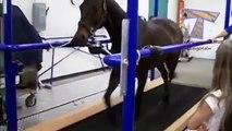 Cats treadmill funny compilation