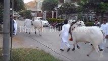 Jori Of Bin Chiragh MASHALLAH 2015 Not For Sale