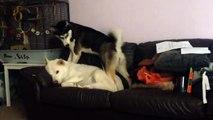 Wake up, wake up, wake up so we can play! =))