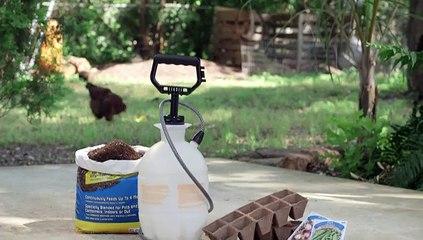 Seedling Watering Trick