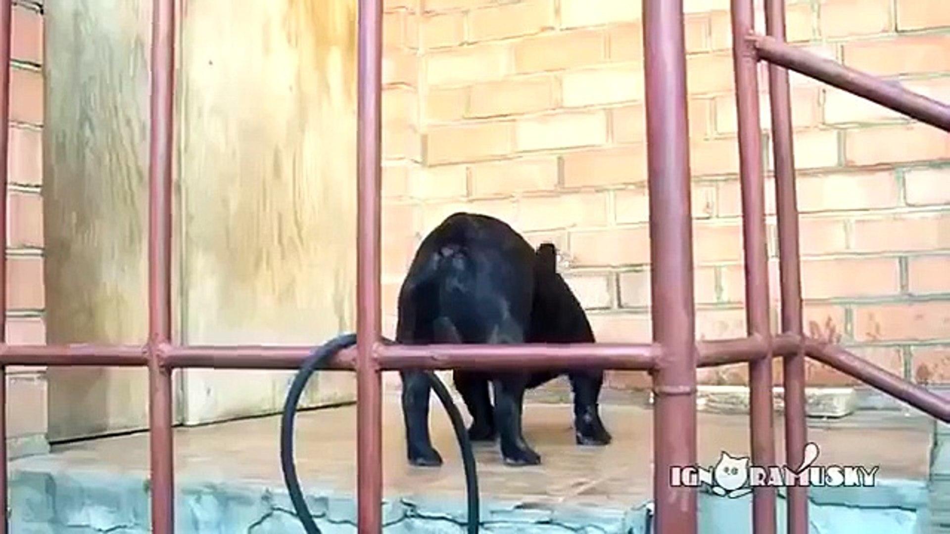 Прикол!)) Ну пустите же меня!))Open the fing door!