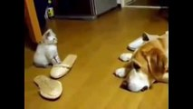 Very Funny Cats Compilation - Funny Cat Videos For Kid - funny cats dancing - funny cats fails - funny cats jokes