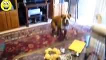 Funny Dogs Scared of Farts - Funny Videos Compilation - funny dogs ever - funny dogs reaction - funny dogs playing