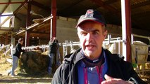 D!CI TV: deux vaches à viande jugées par des jeunes à Rambaud