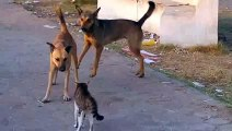 New 2016 cats vs dogs funny fights