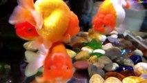 Cá vàng bơi - Nhạc thiếu nhi vui nhộn hay nhất