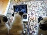 Perros Locos Obsesionados Con Youtube! ★ Perros Locos Humor Divertidos Chistosos