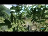 AMD Gaming Evolved Crysis DX10