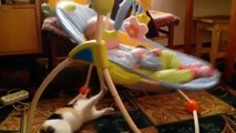 Когда ребенка некому укачать, ПРИКОЛЫ Playful Cat Rocks Baby to Sleep