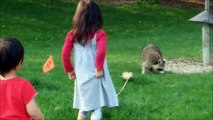 raccoons Two Kids Stop the Raccoons from Bird Feeder Food Fun Kids Videos with Racoon