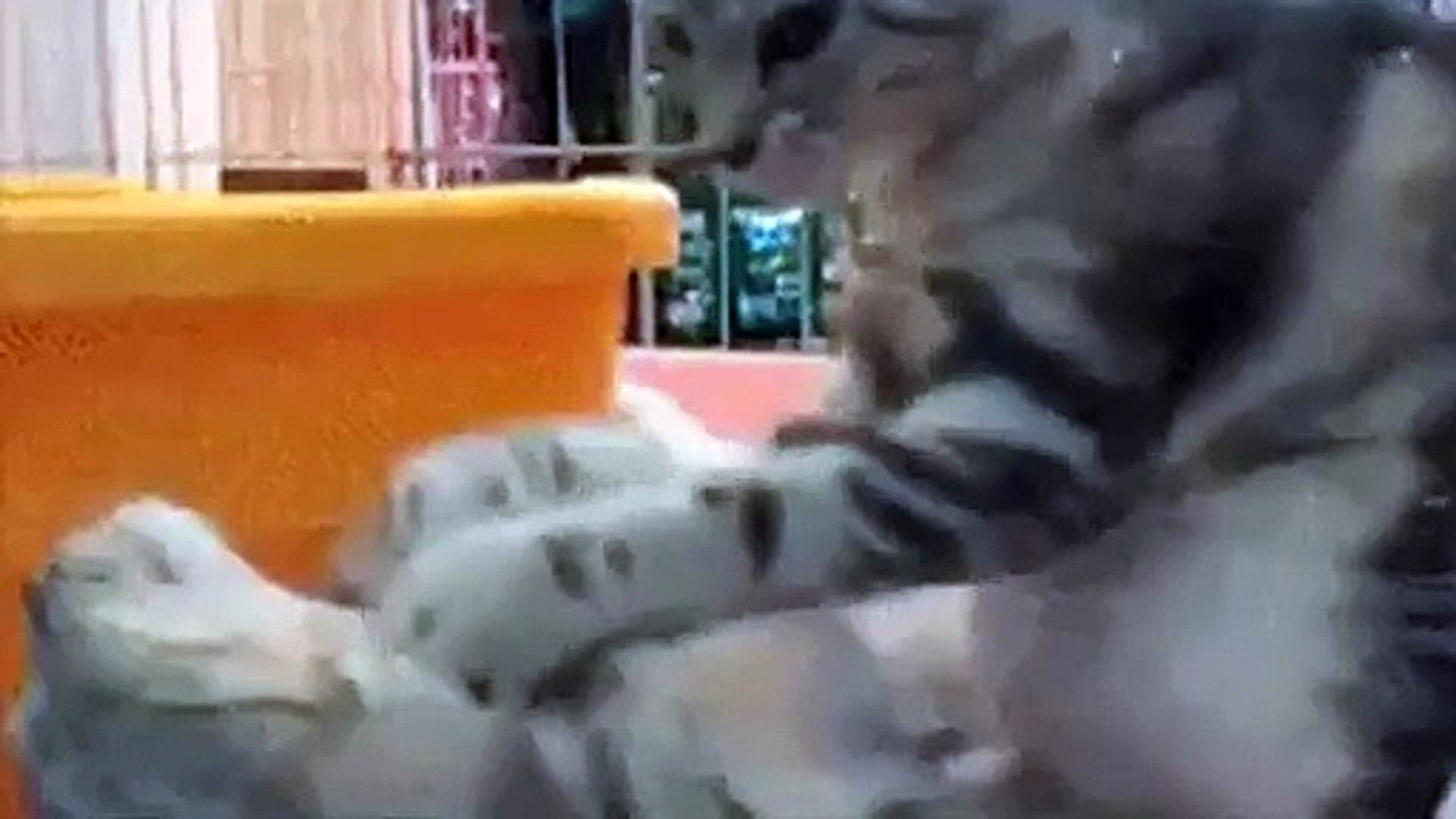 Cat giving a cat a neckrub