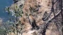 Animal Planet, Animal Planet Leopard vs Python Fight To Dead