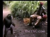 Un singe armé d'une kalashnikov fait peur à des soldats