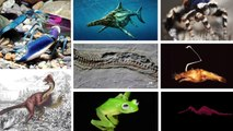 10 Of The Most Bizarre Animal Species Discovered In 2015
