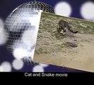 Cat vs Snake – Cat Kills the Snake