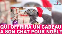 Qui offrira un cadeau à son chat pour noël? À découvrir dans la minute chat #76
